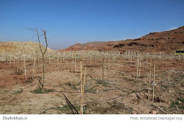 گرامیداشت روز درختکاری در دنیا